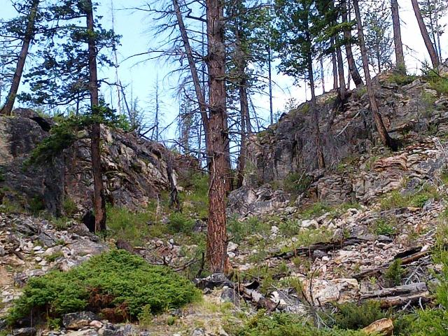 Myra Canyon Forest