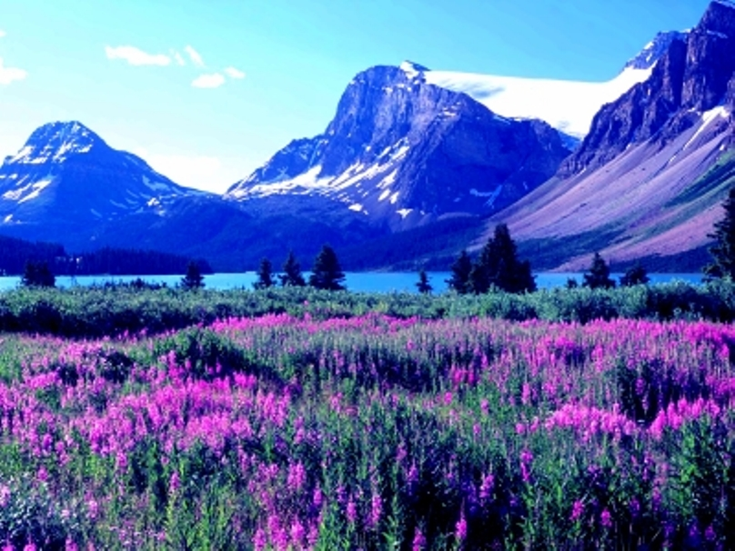 lovelandscape